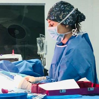 A veterinarian in scrubs performs a procedure