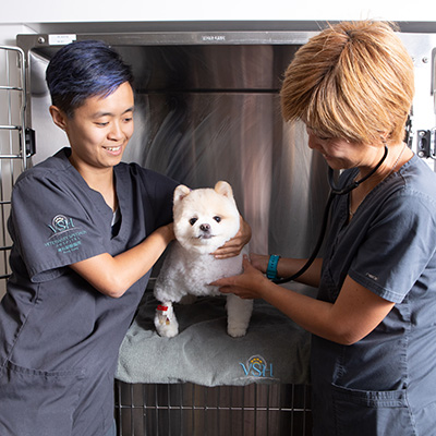 Caring professionals with a white, small dog